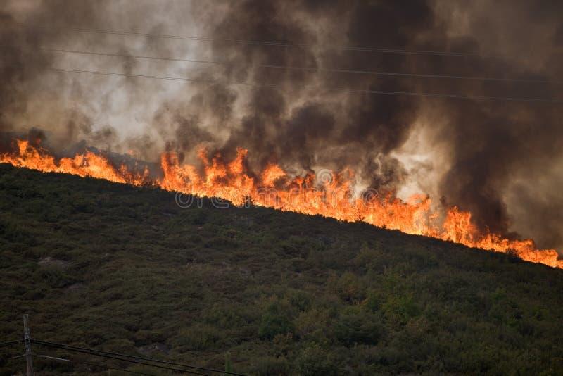 砍伐森林火 库存照片
