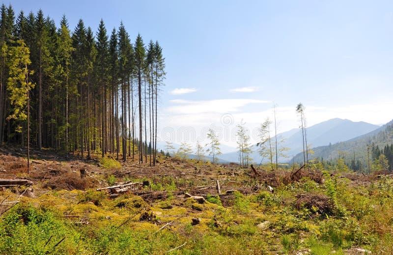 砍伐森林灾害 免版税库存照片