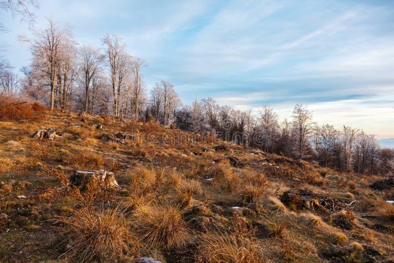 砍伐森林罗马尼亚 免版税库存照片