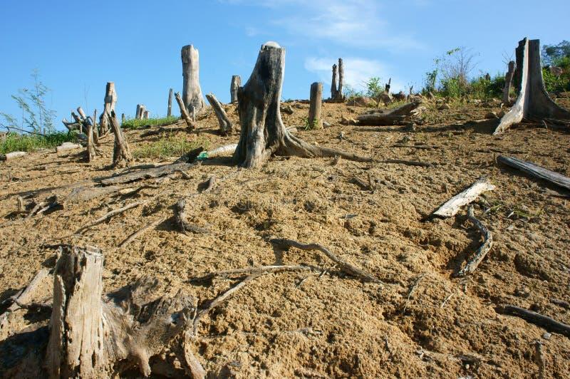砍伐森林,树桩,变动气候,生活环境 免版税库存图片