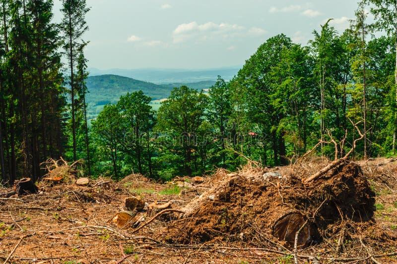 砍在山的树 免版税图库摄影