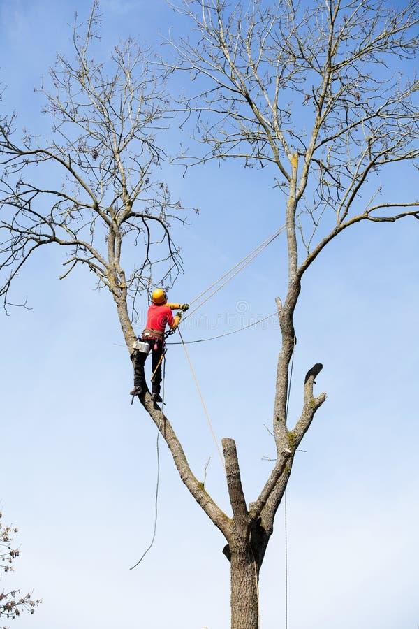 砍树的树木栽培家 免版税库存照片