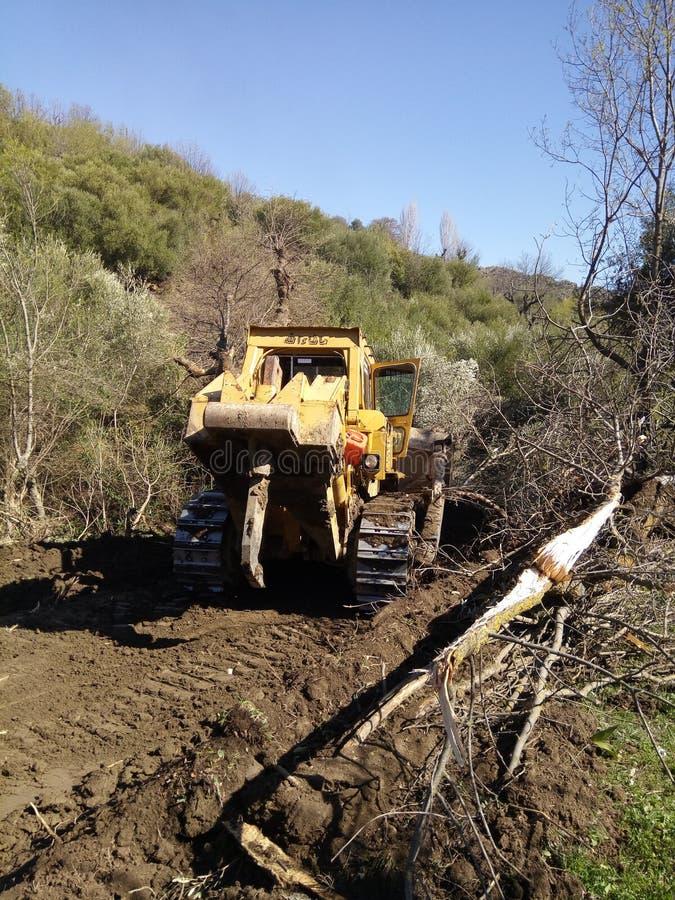 砍结构树 库存图片