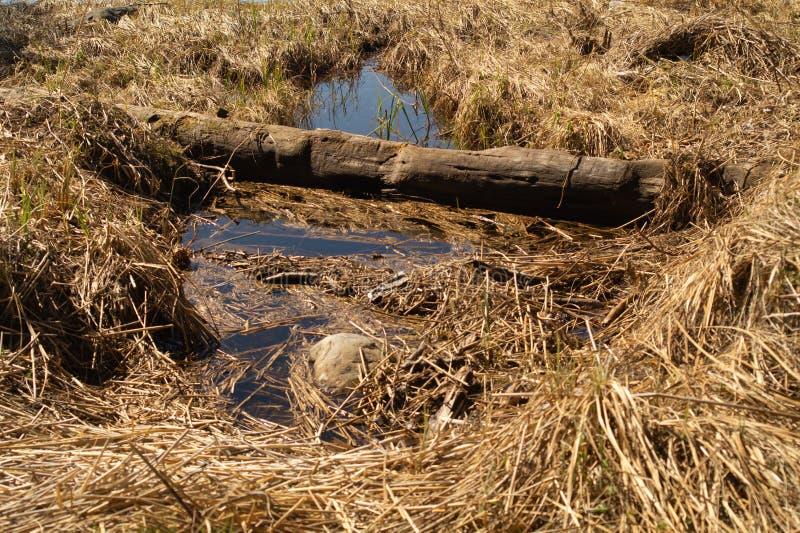 研在与草和枝杈的森林森林土壤 E 免版税库存照片