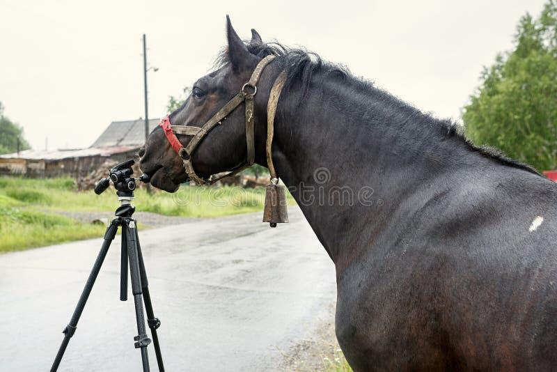 研究照相机的黑国家马三脚架 俄国 库存照片