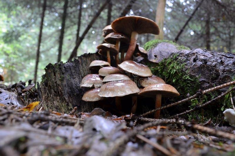 砖一束蘑菇 免版税库存图片