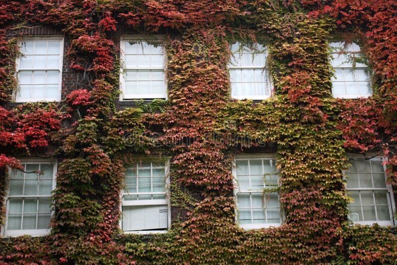 砖叶茂盛墙壁 库存照片