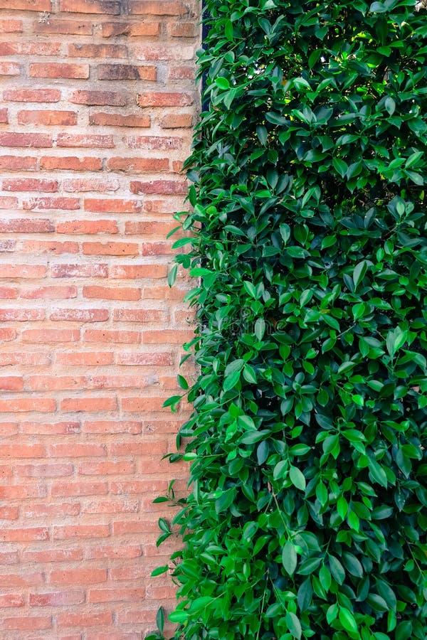 砖和树墙壁 免版税库存图片