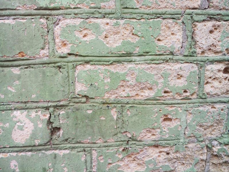 砖墙绿色花,老背景纹理  库存照片