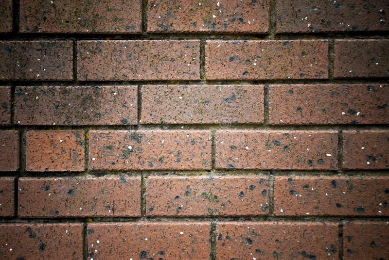 砖棕色花前面庭院墙壁 免版税库存照片