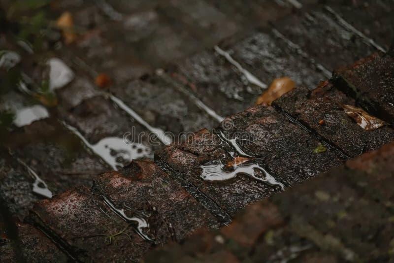 砖步在雨中 免版税图库摄影