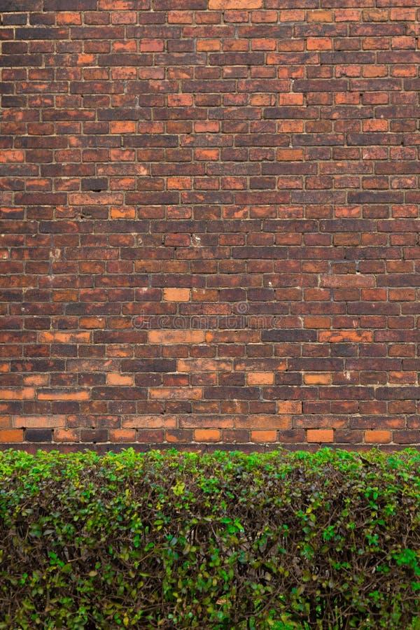 砖篱芭绿色灌木 免版税库存图片