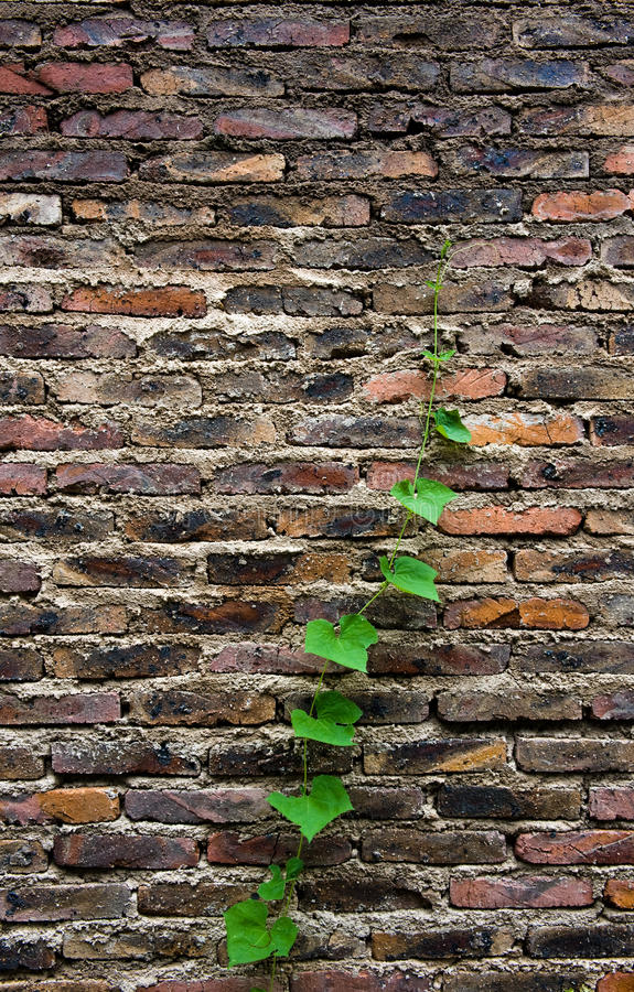 砖绿色寿命 免版税库存照片