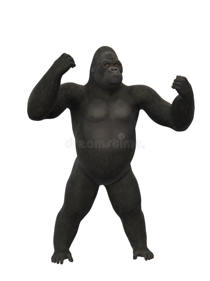 砰砰地走大猩猩的胸口,在白色背景的猴子 库存例证