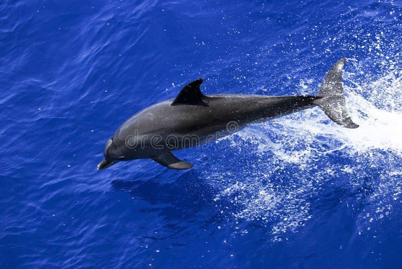 破坏海豚 库存照片