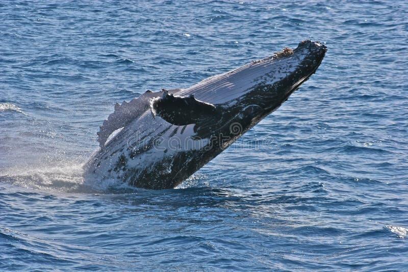 破坏鲸鱼 库存照片
