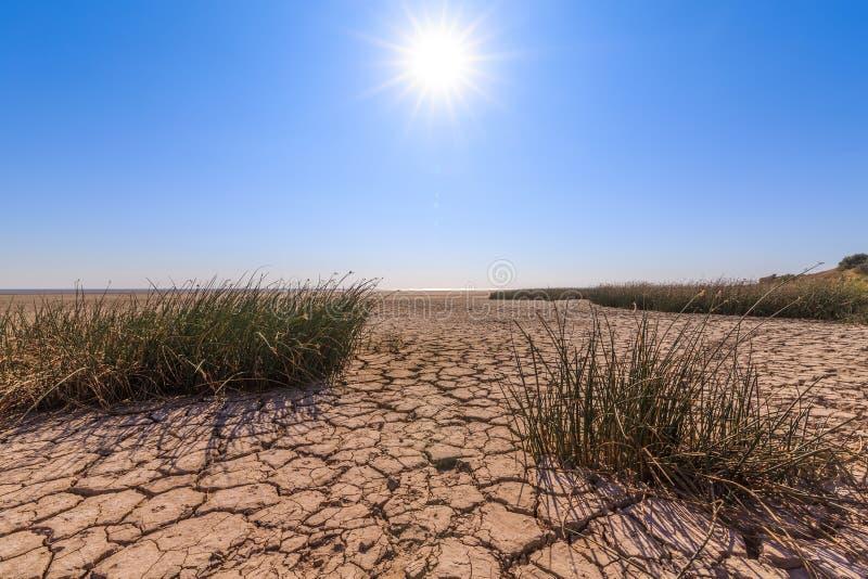 破裂的土地、不足的植被、蓝天和明亮的太阳作为天旱的标志 免版税库存照片