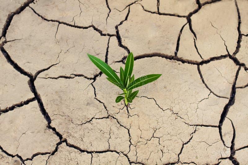 破裂的干燥地球和打破裂缝的一棵绿色偏僻的植物 生态和高潮问题 免版税库存图片