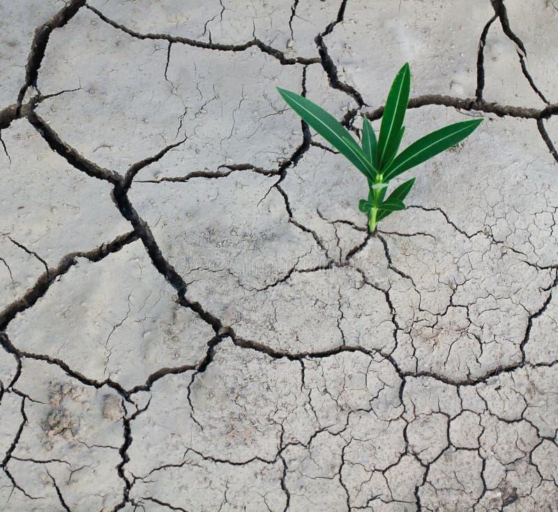 破裂的干燥地球和绿色植物 生态和高潮问题 免版税库存照片