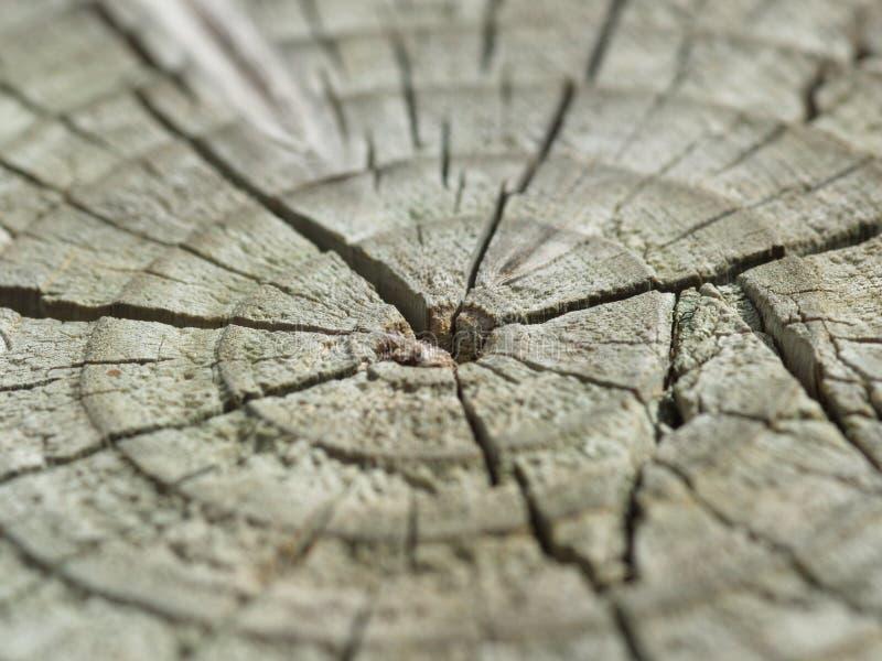 破裂的老树干木头 库存照片