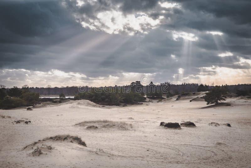 破裂通过在光秃的沙丘风景的云彩的太阳与松树 库存图片