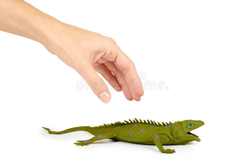 硅树脂在白色背景在手中隔绝的玩具鬣鳞蜥 异乎寻常的动物比赛 免版税库存图片