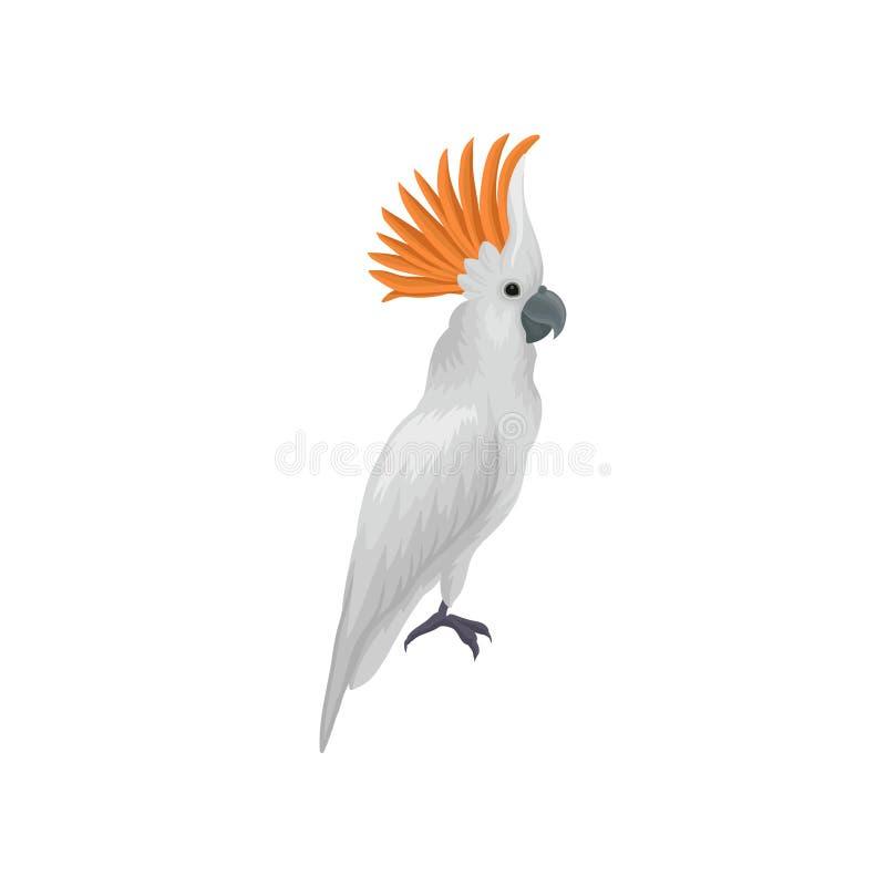 硫磺有顶饰美冠鹦鹉画象  热带大的鹦鹉 异乎寻常的鸟 教育书的平的传染媒介元素或 库存例证