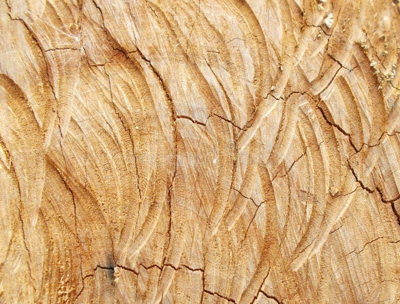 硬木树干切口看了背景、自然被削减的树桩木纹理和木材样式 免版税图库摄影