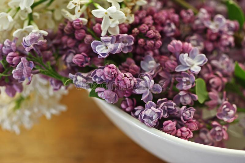 碗丁香紫色白色 库存图片