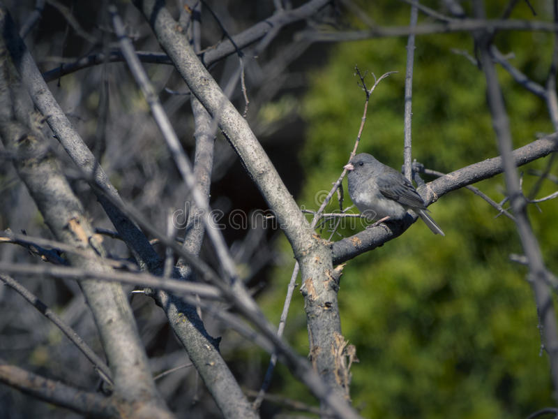 Download 碛鸟 库存图片. 图片 包括有 敌意, 少许, 本质, 捕鸟的人, 春天, brander, 双翼飞机, 晴朗 - 72357249