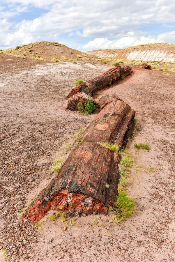 碧玉森林-化石森林国家公园 免版税库存图片