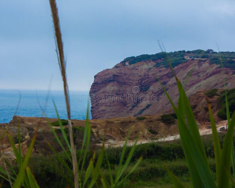 碧草如茵的海崖 库存照片