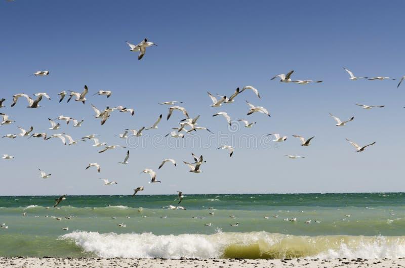 与海滩波浪的海鸥 免版税库存图片