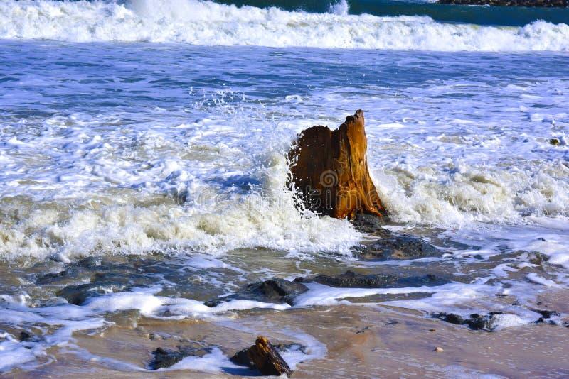 碰撞在树干的波浪 免版税图库摄影