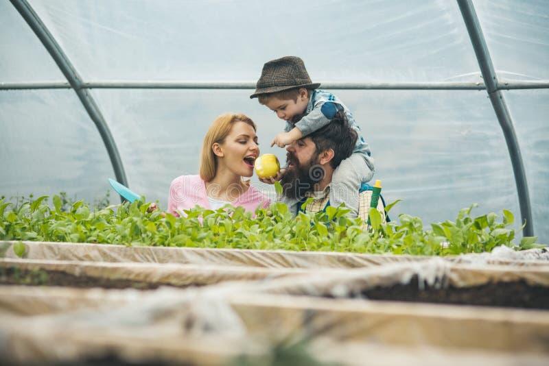 碳概念 碳帮助植物生长 碳农业 土壤在碳哺养 一切增长充满爱 库存照片