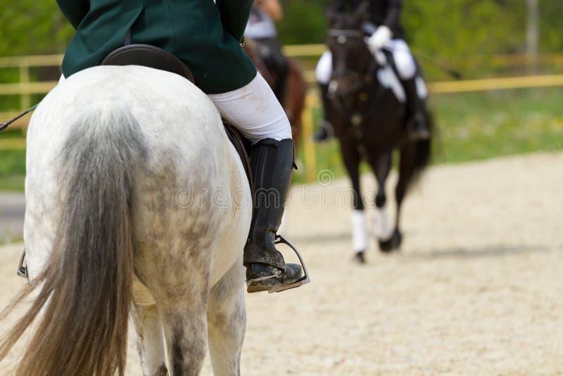 磨练驯马穿戴的骑马形式比赛马女骑士图象奥林匹克可实现的体育运动 免版税库存照片