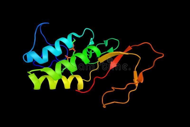 磷脂酶a2,从seco发布脂肪酸的酵素