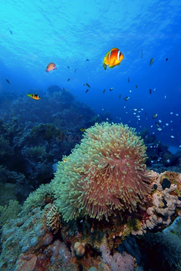 礁石场面热带水中 库存照片