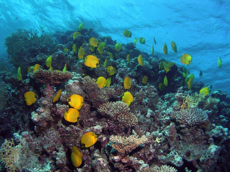 礁石视图 库存照片