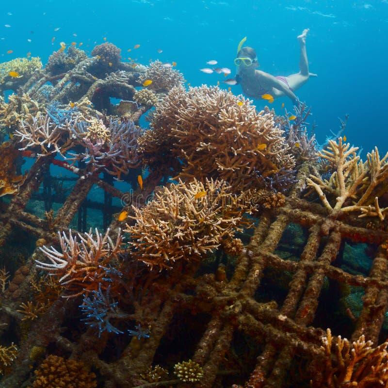 礁石 库存照片