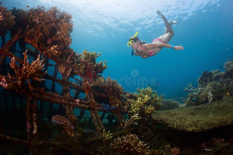 礁石 免版税库存照片