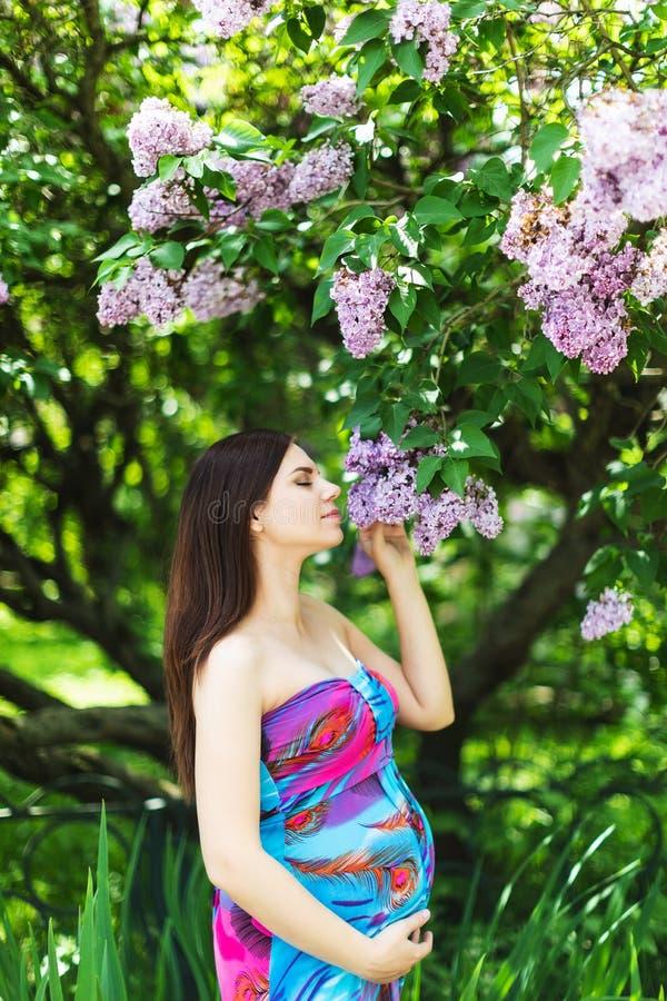 礼服的怀孕的女孩在淡紫色庭院里 库存图片