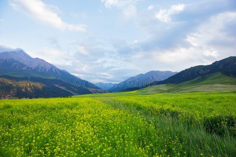 祁连山山的山坡视图 免版税图库摄影