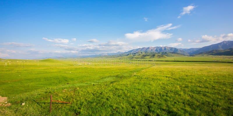 祁连山高原草甸在夏天 免版税图库摄影