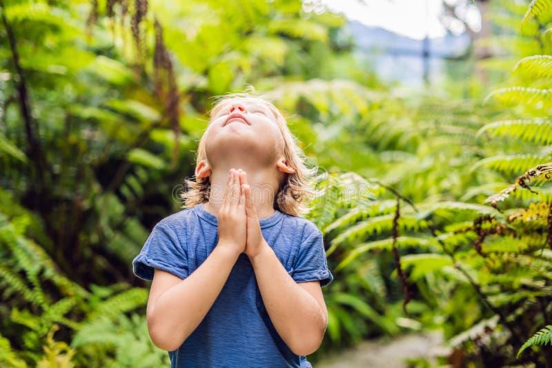 祈祷在森林的逗人喜爱的小男孩 免版税图库摄影