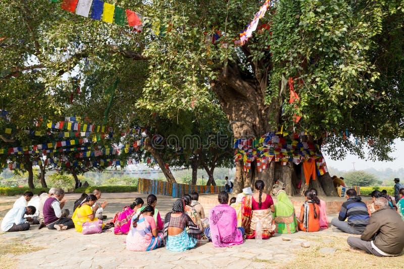 祈祷在Bodhi树下的香客在蓝毗尼,尼泊尔 图库摄影