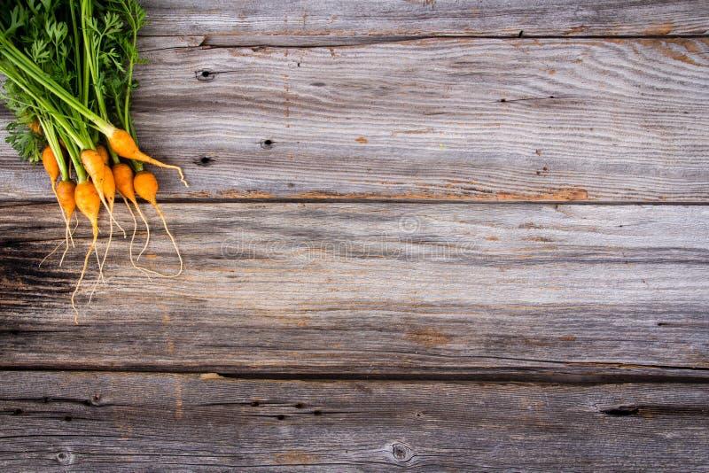 祖传遗物有机微型红萝卜 库存照片