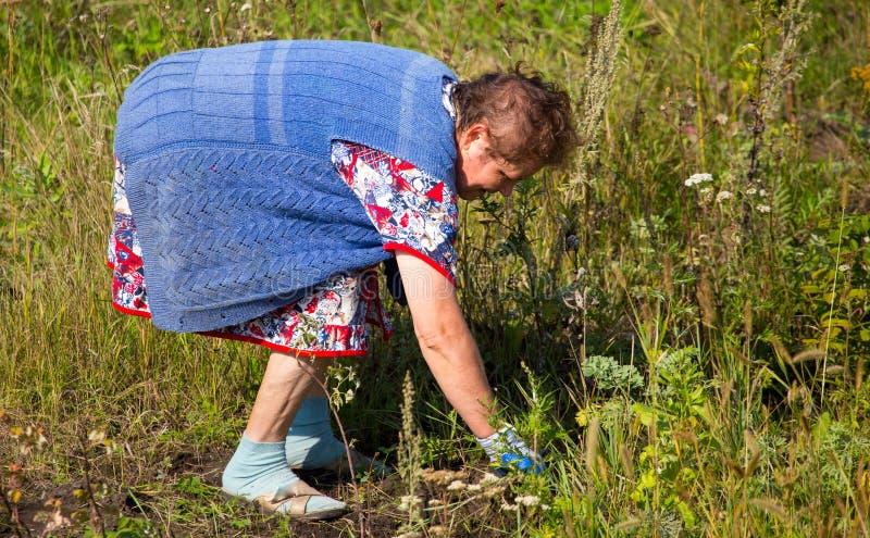 祖母在庭院里撕下草 库存照片