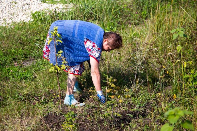祖母在庭院里撕下草 免版税库存图片
