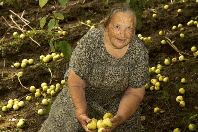 祖母拿着苹果在背景中的86年犁了领域 免版税库存照片